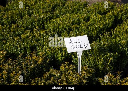 All Sold   Box plants sold in J Jones Nursery in Southport, Merseyside, UK - Stock Photo