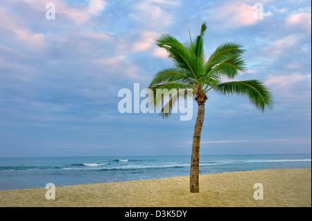 Palm tree and ocean on the Kohala Coast. The Big Island, Hawaii. - Stock Photo