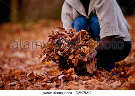 A woman gathering leaves in autumn time, close up - Stock Photo