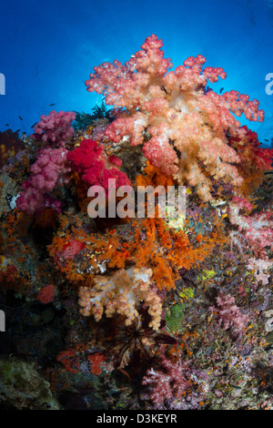 Soft coral in Raja Ampat, Indonesia. - Stock Photo