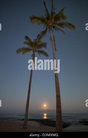 Moonset and palm trees. Hawaii, The Big Island. - Stock Photo