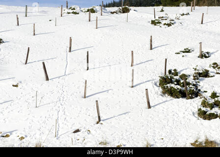 Fence posts create an unusual feature on a snowy hillside in Aberdeenshire - Stock Photo