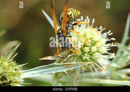 Wasp in the nature - Stock Photo