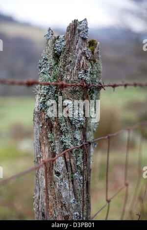 Old weathered fence post and barbed wire fence, Lake District, Cumbria - Stock Photo