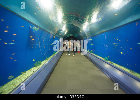 Water tunnel in Kaiyukan Osaka aquarium, japan - Stock Photo
