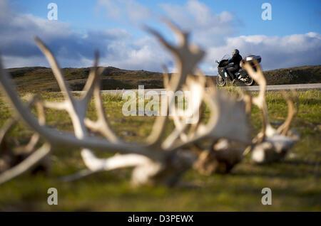 Reindeer Antlers in North Cape Norway - Stock Photo