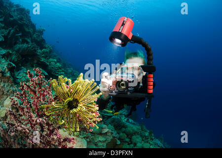 A diver shooting with a small camera system lines up on a crinoid and soft coral on an Indonesian reef. - Stock Photo