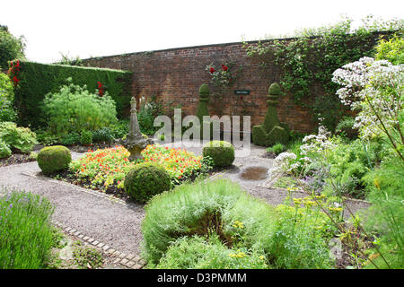 formal planting  in the herb border of the Walled Garden Arley Hall gardens Cheshire England UK - Stock Photo