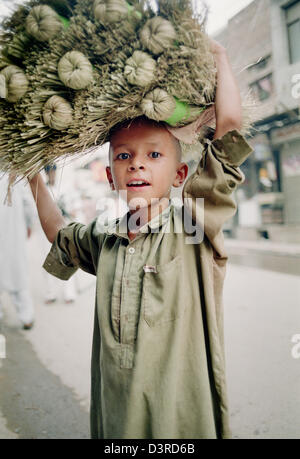 Boy carrying dry flowers, Peshawar, North-West Frontier Province, Pakistan, Indian Sub-Continent, Asia - Stock Photo