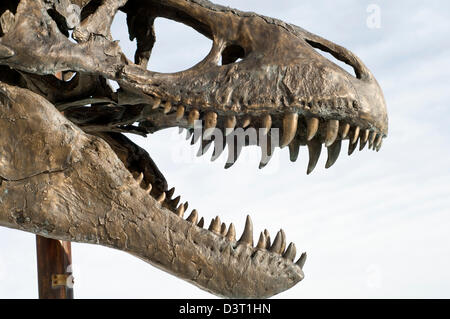 Head of a life-size T-Rex model  (called Big MIke) outside the Museum of the Rockies in Bozeman, Montana, United - Stock Photo