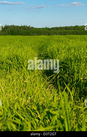 Track in the field against the blue sky - Stock Photo