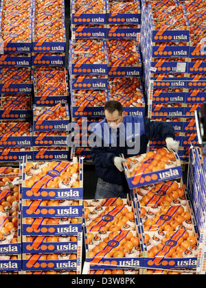 A worker stacks crates of oranges and tangerines at the wholesale market in Hamburg, Germany, 16 January 2007. Photo: - Stock Photo