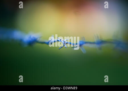 A close up of barbed wire - Stock Photo