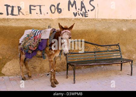 The impressive resistances indispensable donkeys in Morocco! - Stock Photo