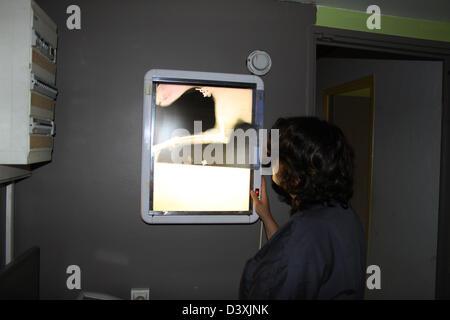 Veterinary Examining X Rays of a dog - Stock Photo