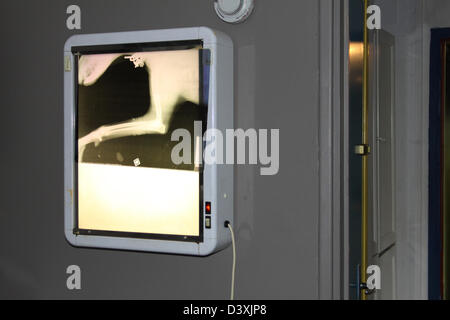 Veterinary Examining X Rays of a dog - Stock Photo