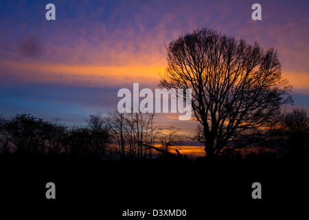 trees in a countryside scene at sunset - Stock Photo