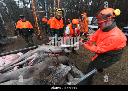 Lehnitz, Germany, Jaeger puts killed wild game into a Haenger - Stock Photo