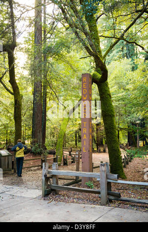 ENTRANCE TO BIG BASIN REDWOODS STATE PARK - Stock Photo