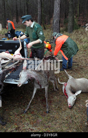 Lehnitz, Germany, Federal Foerster lay killed wild game on the loading area of a car - Stock Photo