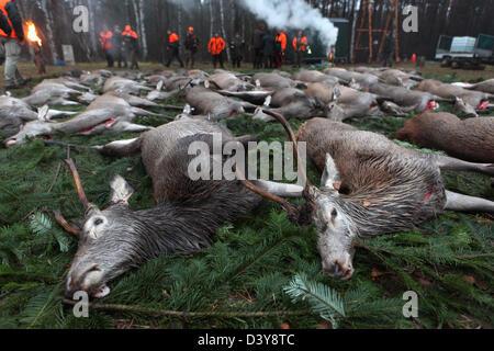 Lehnitz, Germany, killed wild game on the ground - Stock Photo