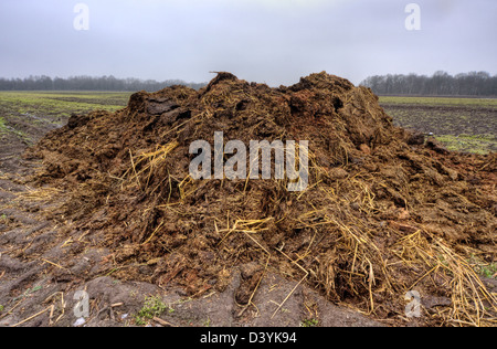 Heap of horse manure on a field - Stock Photo