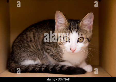 Kitten in Cardboard Box - Stock Photo