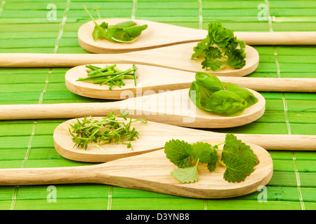 Variety of herbs on wooden spoons - Stock Photo