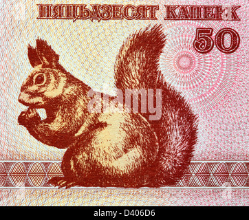 50 Kapeek banknote, Squirrel, Belarus, 1992 - Stock Photo