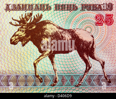 25 rubles banknote, Moose, Belarus, 1992 - Stock Photo