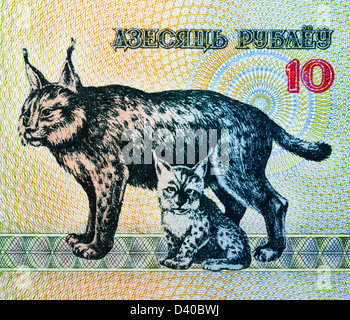 10 rubles banknote, Lynx with kitten, Belarus, 1992 - Stock Photo