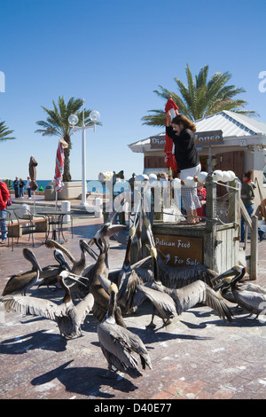 St Petersburg Florida USA Young girl feeding fish bought at Pier Bait House group Brown Pelicans with young people - Stock Photo