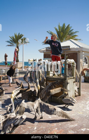 St Petersburg Florida USA Young boy throwing fish bought at Pier Bait House to group Brown Pelicans with young girl - Stock Photo
