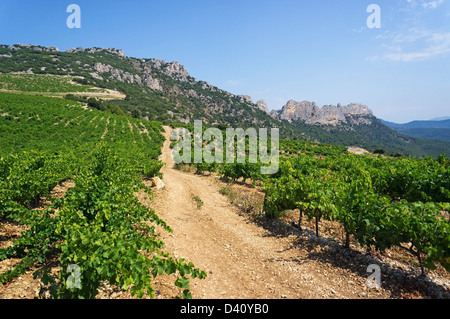 Vineyards in the summer in the Dentelle de Montmirail National Park, Vacluse, Provence, South of France, Europe - Stock Photo