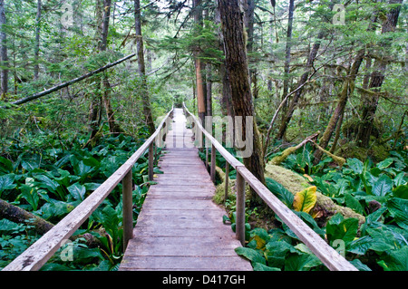A hiking trail through dense temperate rainforest in the Great Bear Rainforest, Bella Coola Valley, British Columbia, - Stock Photo