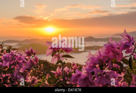 Red flowers frame the sunset over the islands in harbor of Charlotte Amalie St Thomas USVI - Stock Photo