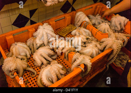Octopus for sale in fish market.  Sousse Tunisia - Stock Photo