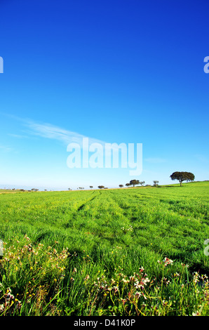 Trees on green field, alentejo, Portugal - Stock Photo