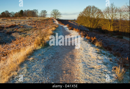 Early frosts first signs of winter on the Cannock Chase Area of Oustanding Natural Beauty in late Autumn Staffordshire - Stock Photo