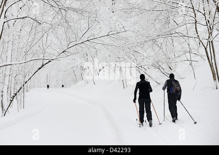 men cross-country skying in Snow covered Mont Royal Park in Winter, Parc du Mont Royal, Montreal, Quebec, Canada - Stock Photo