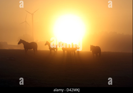 Görlsdorf, Germany, silhouettes of horses at sunrise - Stock Photo