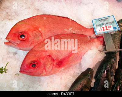 Red snapper fresh fish on ice for sale at Ashton's Cardiff Market Central Cardiff South Wales UK - Stock Photo