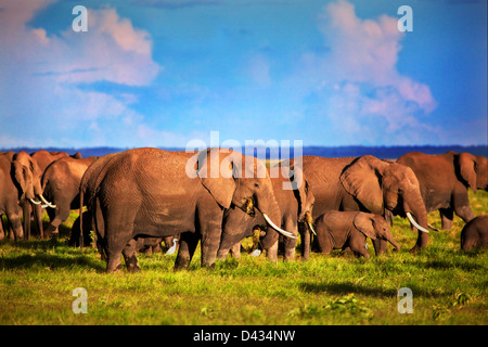 Elephants - African elephant herd on African savanna, Safari in Amboseli National Park Kenya, Africa (Loxodonta - Stock Photo
