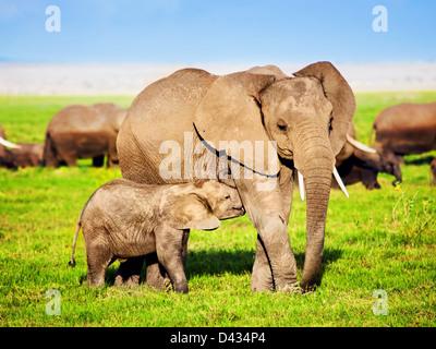 Mother African elephant and baby elephant in Amboseli National Park, Kenya, Africa (Loxodonta africana) - Stock Photo