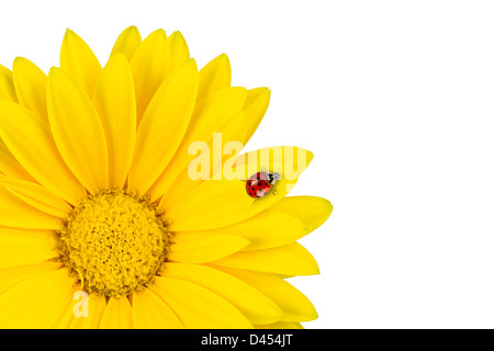 ladybug on yellow gerbera blossom - Stock Photo