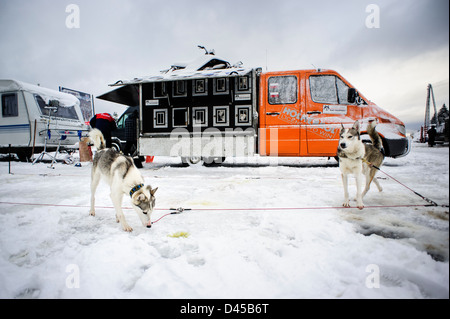 Sled dogs before racing at the Border Rush competition in Jakuszyce, Poland. - Stock Photo