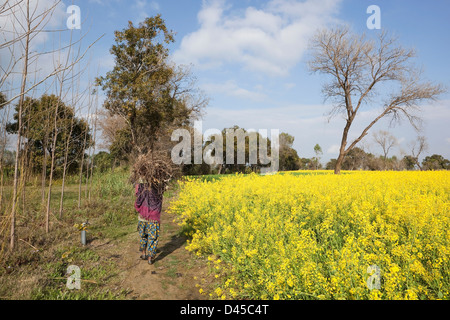 A Punjabi woman carrying firewood home in the rural landscape of Punjab India - Stock Photo