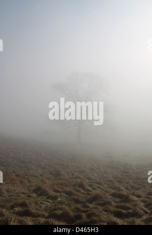 trees mist and fog in Steyning Bowl on the south downs in west sussex england - Stock Photo