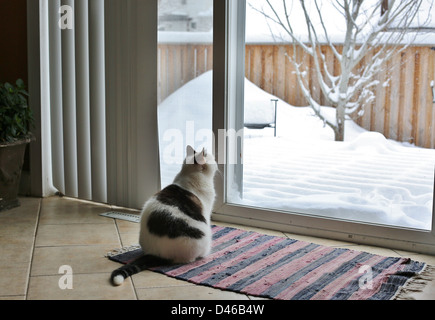 A cat looks longingly out a window at a snow covered yard. - Stock Photo