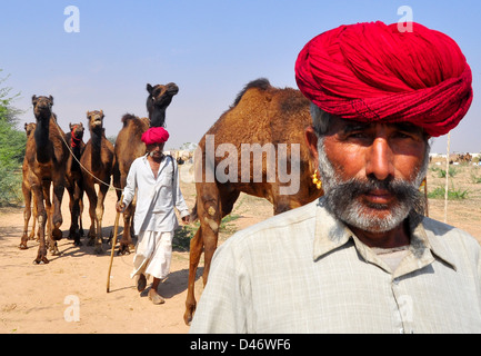 Villager lead camels at Nagaur cattle fair in western Indian Rajasthan state. - Stock Photo